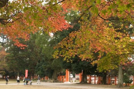 Kyoto12