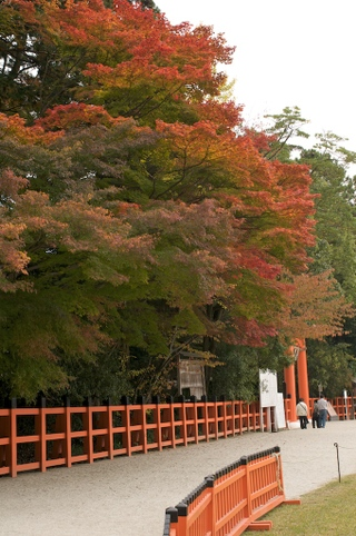 Kyoto38