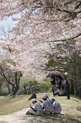 Sakura04_2