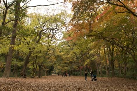 Shimokamo07