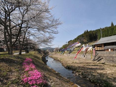 Springflowers52