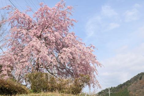 Springflowers58