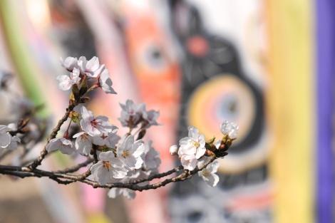 Springflowers61