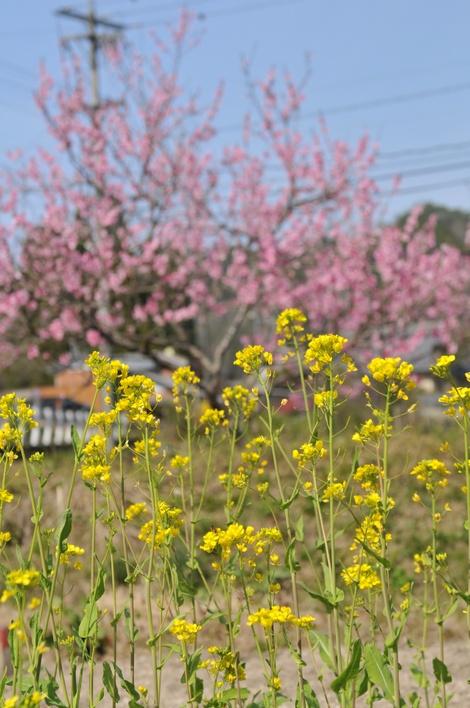 Springflowers63