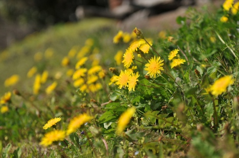 Springflowers65