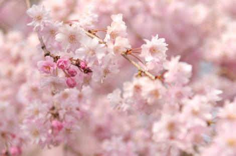 Springflowers69