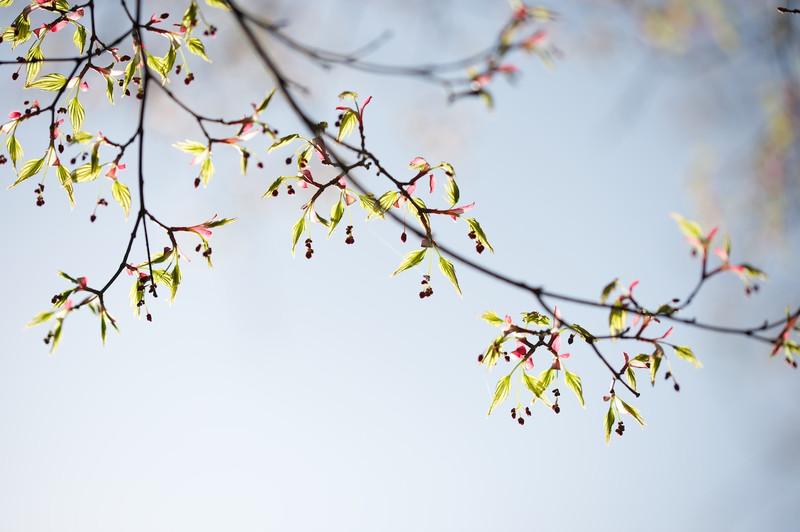 Sakura27