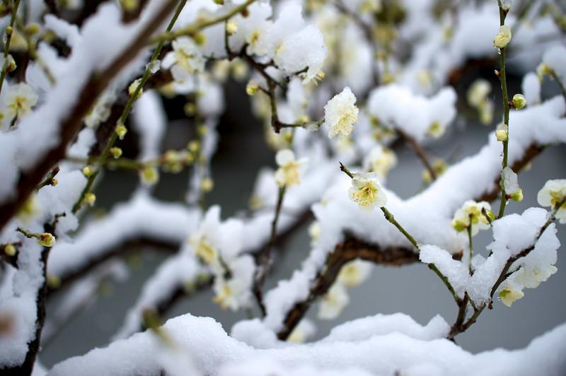 Snowshirotori07