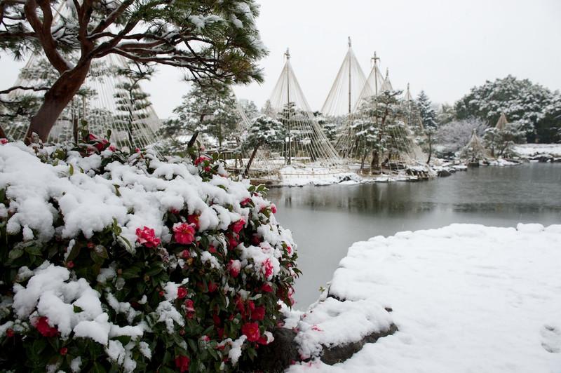 Snowshirotori39