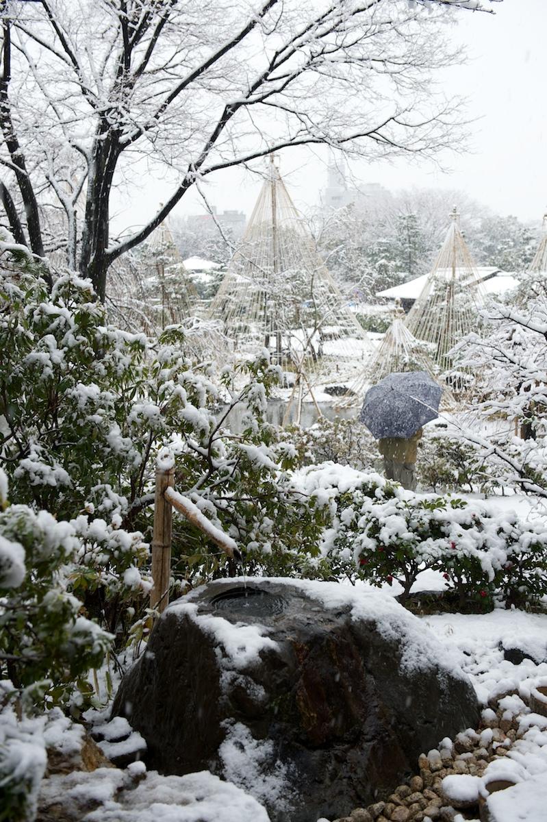 Snowshirotori09